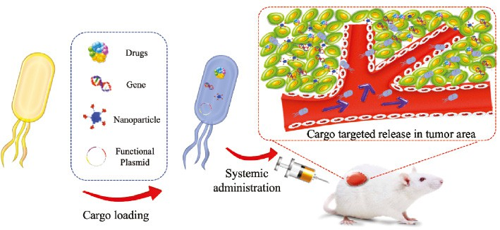 Microbes in Oncology Controllable Strategies for Bacteria Therapy